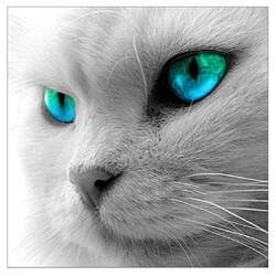 Очите на котето 30/30 см
