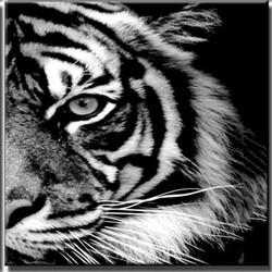 Тигър 40/50 см