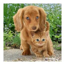 Коте и куче 30/30 см