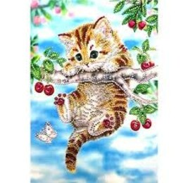 Сладко коте