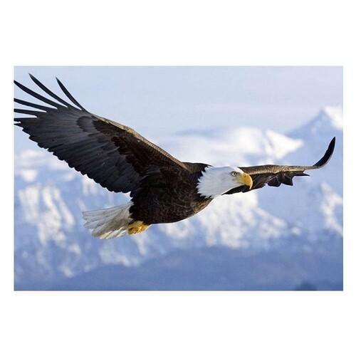 Белоглав орел 40/30 см
