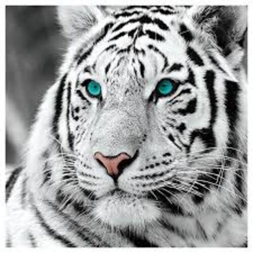 Тигър 40/40см