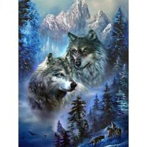 Вълци 40/50 см