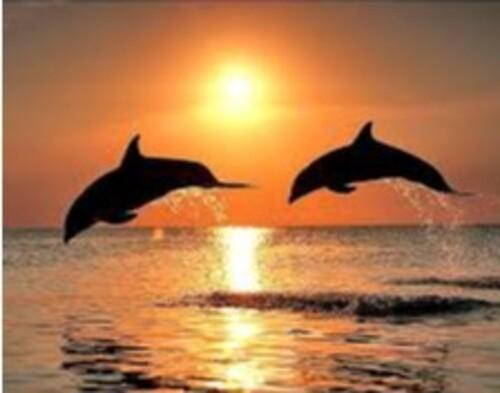 Делфини 35/25 см