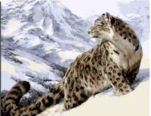 Леопард 50/40 см