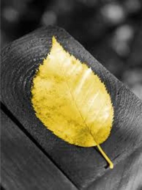 Златен лист 30/40 см