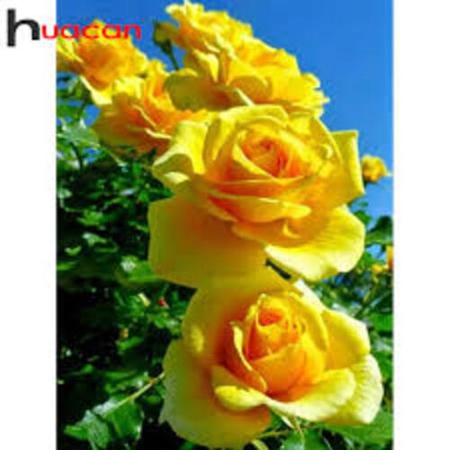 Рози 45/60 см