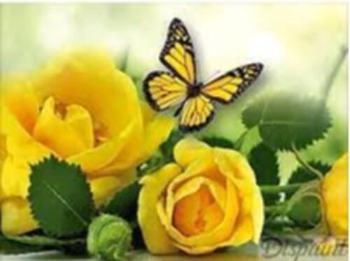 Рози и пеперуда 40/30 см