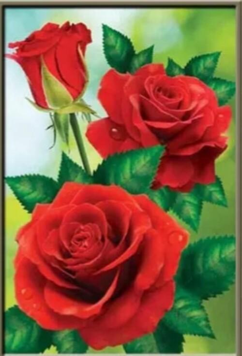 Червени рози 30/40 см