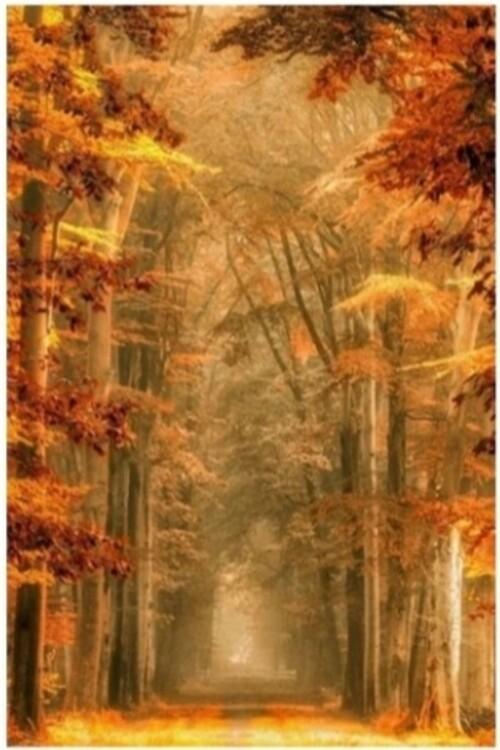 Пътека в гората 40/50 см