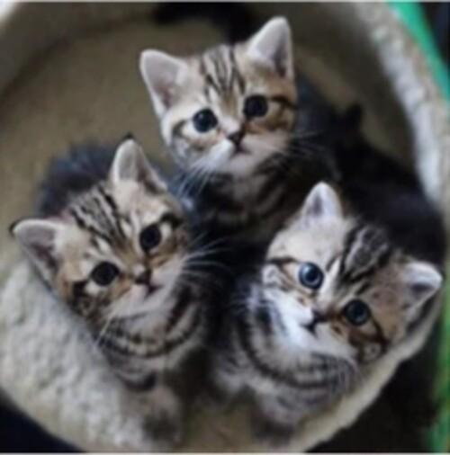 Малки котета 25/25 см