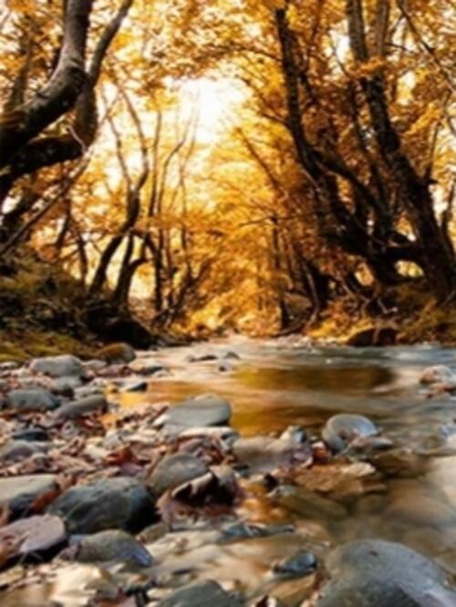 Река в гората 40/50 см